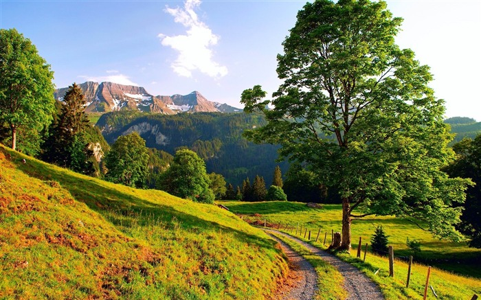 sunny mountain path-Landscape HD Wallpapers Views:5013