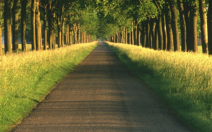 tree alley-Landscape HD Wallpapers Views:3907