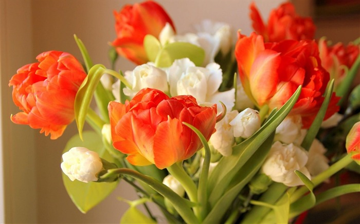 tulips flowers flowing-Flowers HD Wallpaper Views:2294