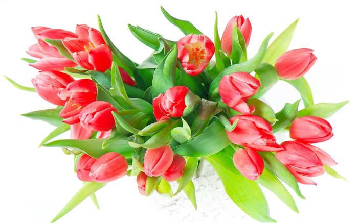 color red tulips-Photos HD Wallpaper Views:3430