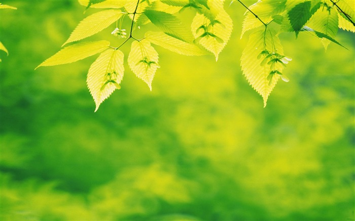 Green leaves-Photography HD Wallpaper Views:3267