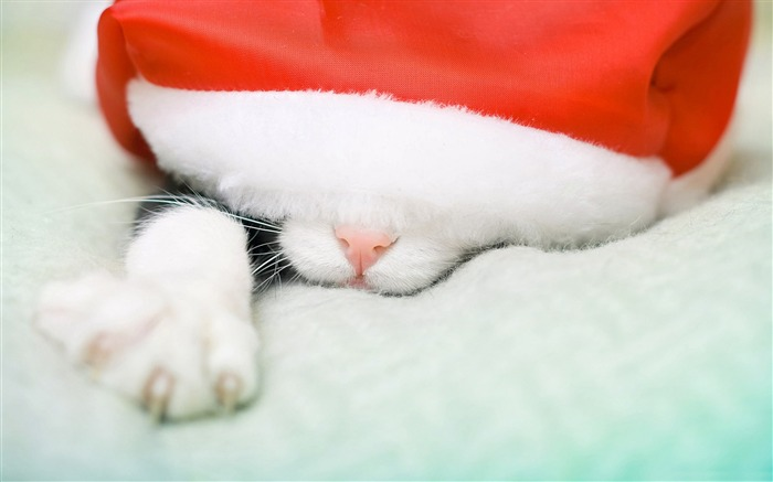 Santa cat-Festival theme wallpaper Views:4214