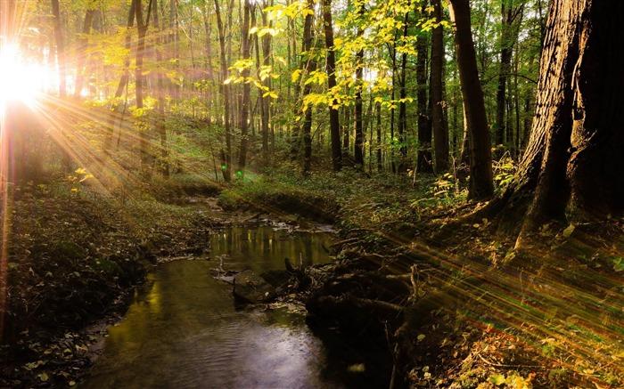 河流树木草地夏光-图片高清壁纸