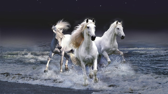 2014 Chinese New Year of the Horse Wallpaper 11 Views:2505