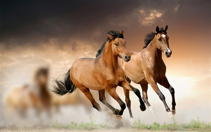 2014 Chinese New Year of the Horse Wallpaper Views:9510