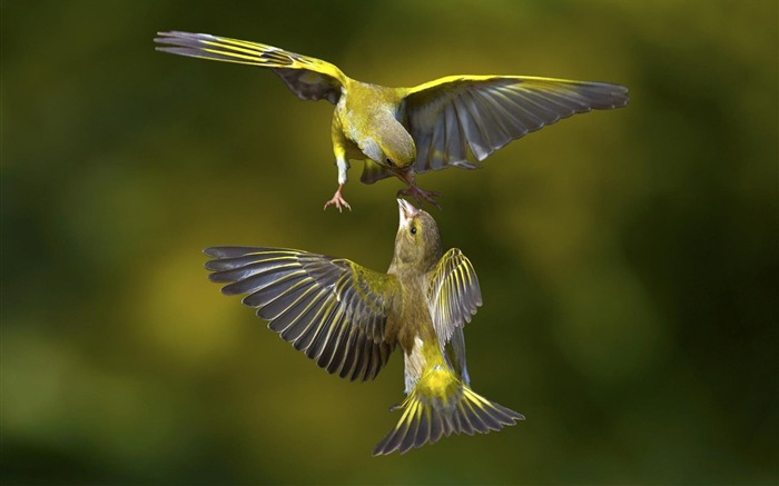 鸟类飞行-动物图片壁纸