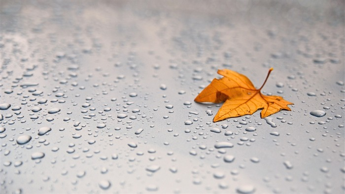 leaf maple surface drops-Macro photography wallpaper Views:3568 Date:2/24/2014 8:24:06 PM