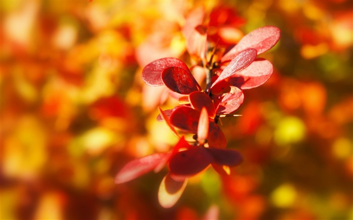 plant autumn leaves-Image HD Wallpapers Views:2081