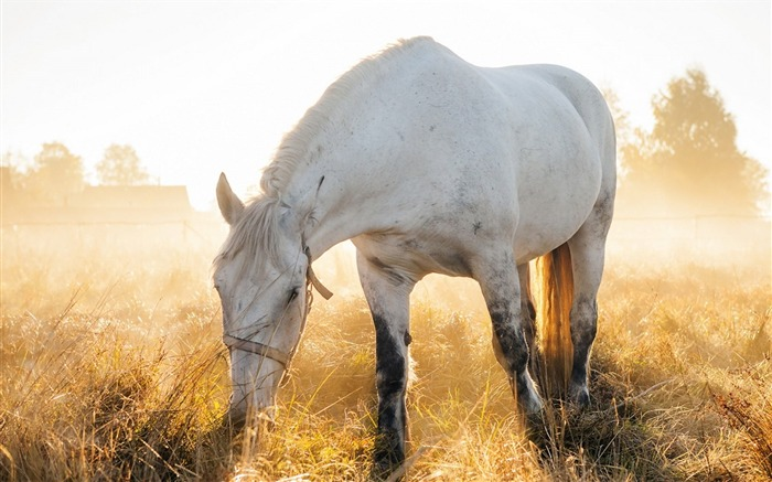 white horse nature-High quality wallpaper Views:1577