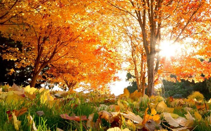 秋天的树木的叶子-高清图片壁纸 预览