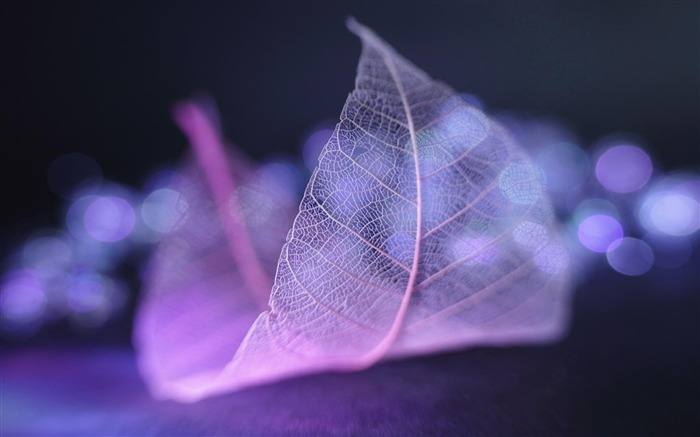 Transparent leaf vein abstract wallpaper Views:12300