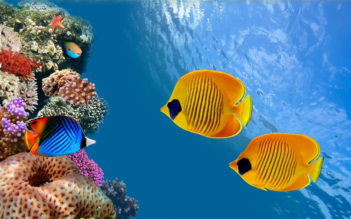 aquarium fish-Animal HD Wallpaper Views:6892