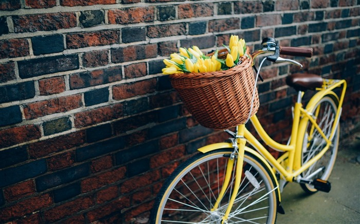 bike flowers yellow tulips-High quality wallpaper Views:2424