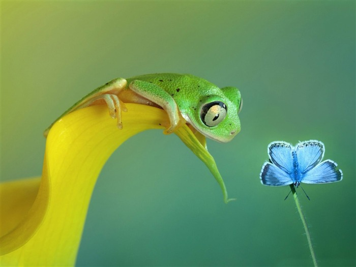 cute green frog-Animal HD Wallpaper Views:4228