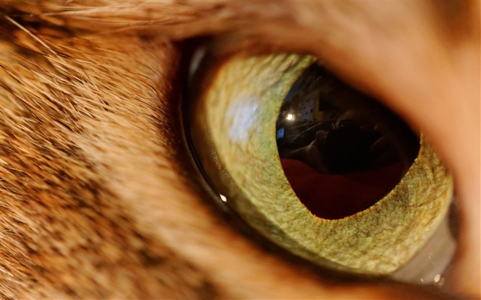 eye of the tiger-Animal HD Wallpaper Views:3372
