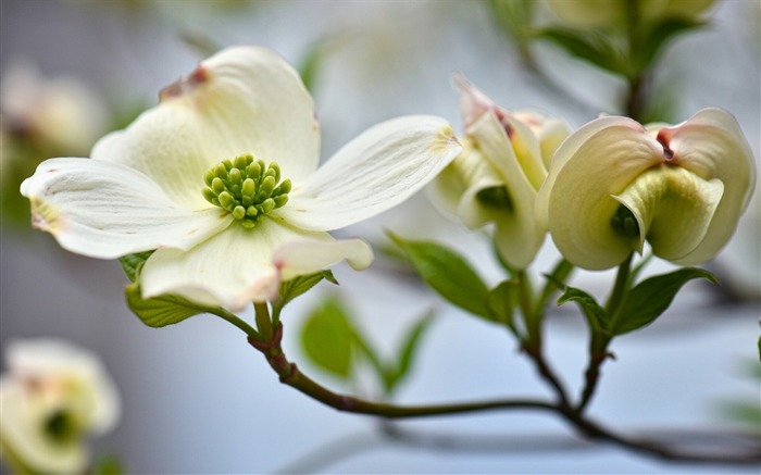 flower white-plants images wallpaper Views:2689