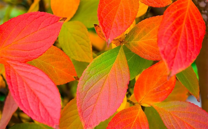leaves autumn-plants images wallpapers Views:2611
