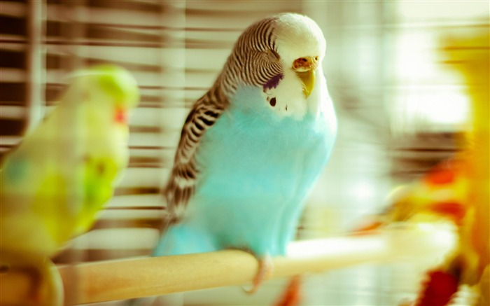 sleeping parrot-Animal HD Wallpaper Views:3291