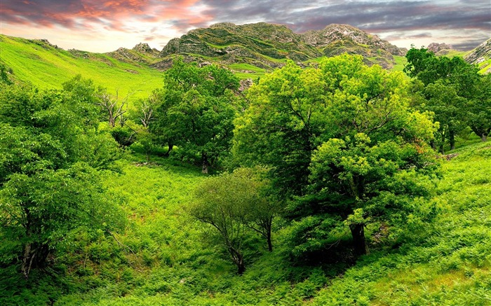 trees green brightly-Nature Photo Wallpaper Views:2881
