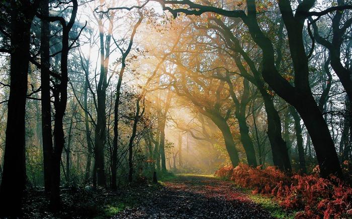 森林阳光-风景高清墙纸 预览
