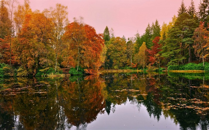forest lake autumn-Landscape HD Wallpaper Views:2988