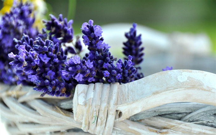 lavender flowers-Plants desktop wallpaper Views:2039