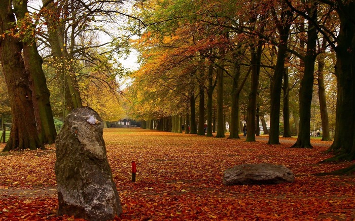 park autumn leaves-Landscape HD Wallpaper Views:3437