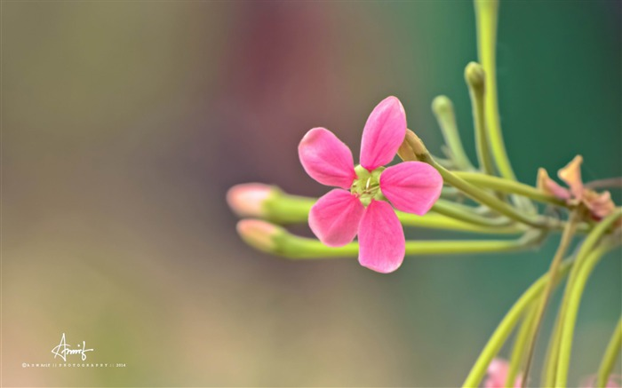 pink small flower-Plants desktop wallpaper Views:2846