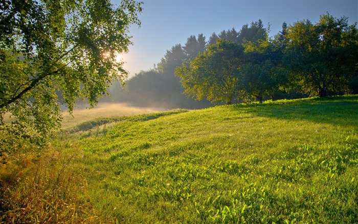 summer morning-Landscape HD Wallpaper Views:3653