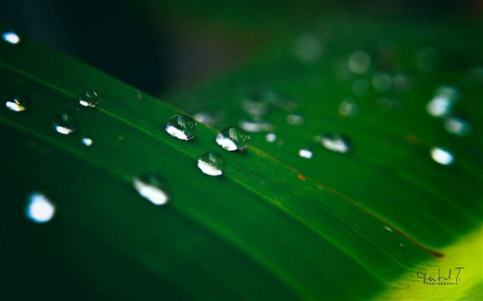 water drop on green leaf-Plants desktop wallpapers Views:1328
