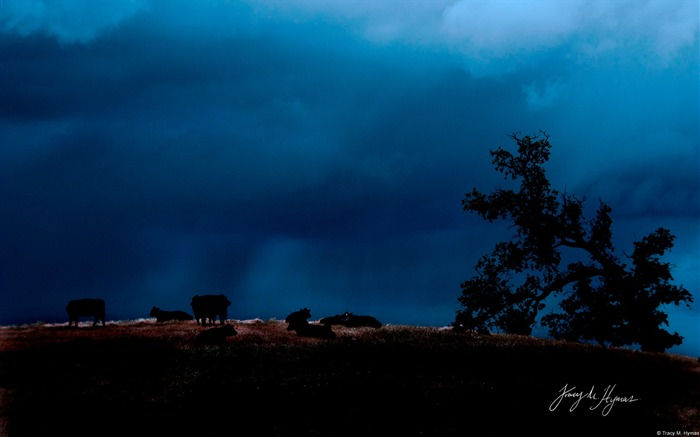 Livestock under stormy sky-Windows Theme Wallpaper Views:3006