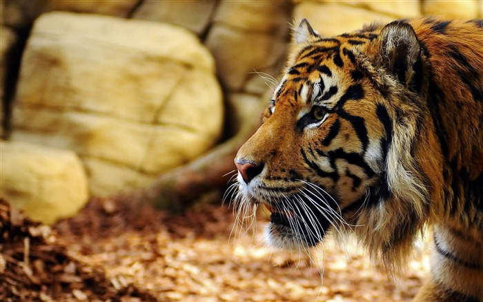 Best Animal World HD Desktop Wallpaper Views:6232