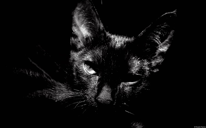 Black and white cat-Windows 8 Theme Wallpaper Views:3533