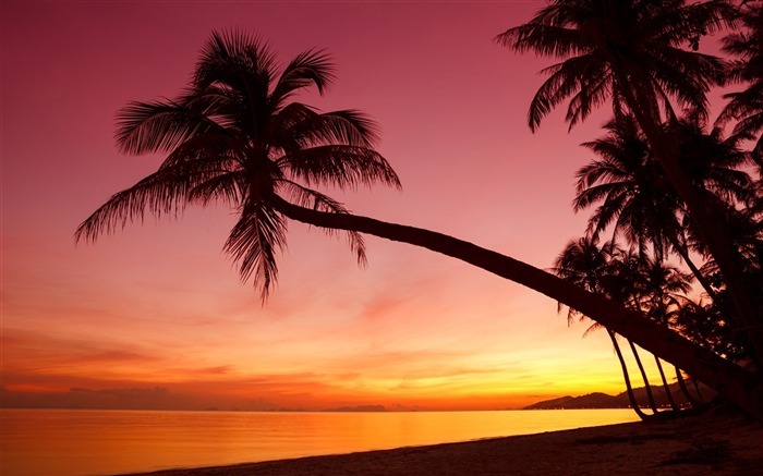 Palm Tree Beach Sunset-Summer Photo HD Wallpaper Views:2898