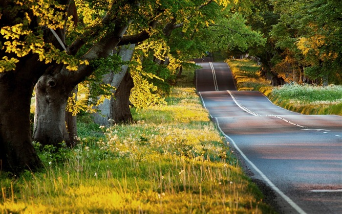 beautiful road-Summer Photo HD Wallpaper Views:3452