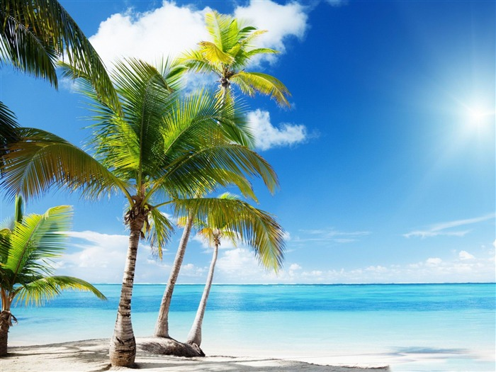 tropical beach paradise-Summer Photo HD Wallpaper Views:1743