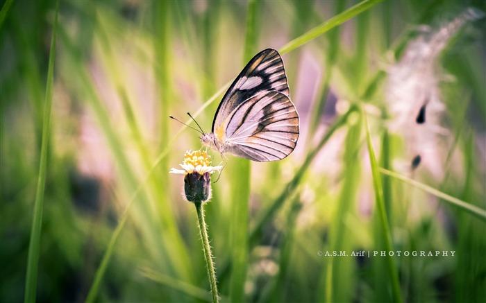 蝴蝶飞行-动物写真壁纸 预览