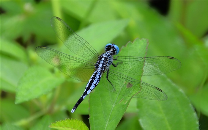 dragonfly-Animal photo wallpapers Views:3018