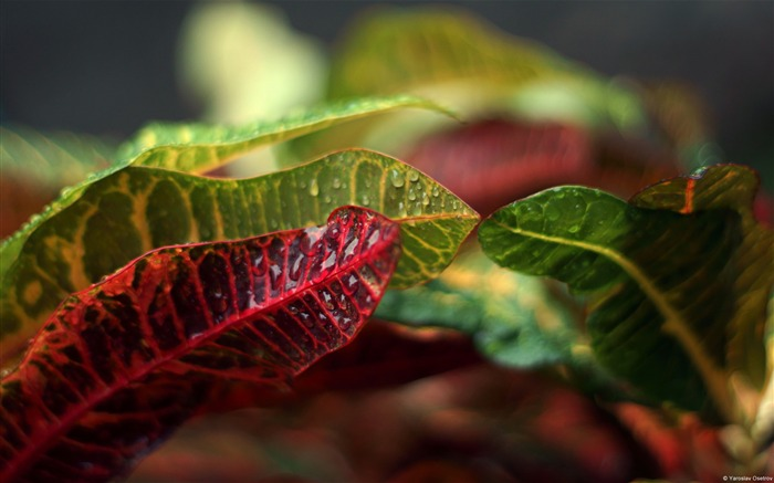 Leaves of tropical plants-Windows Theme Wallpaper Views:3038