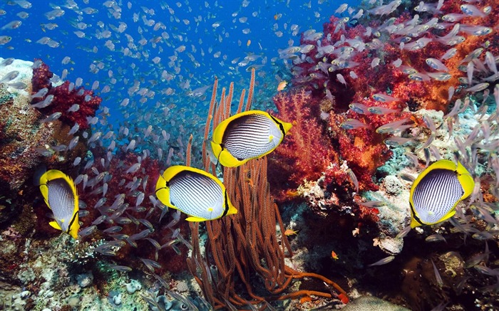 Underwater Fish-Animal photo wallpapers Views:1379