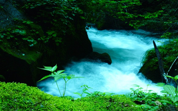 oirase mountain stream-Landscape HD Wallpapers Views:2282