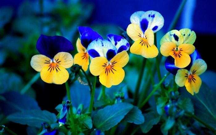 Beautiful flowers plants HD Photo Wallpaper Views:8656