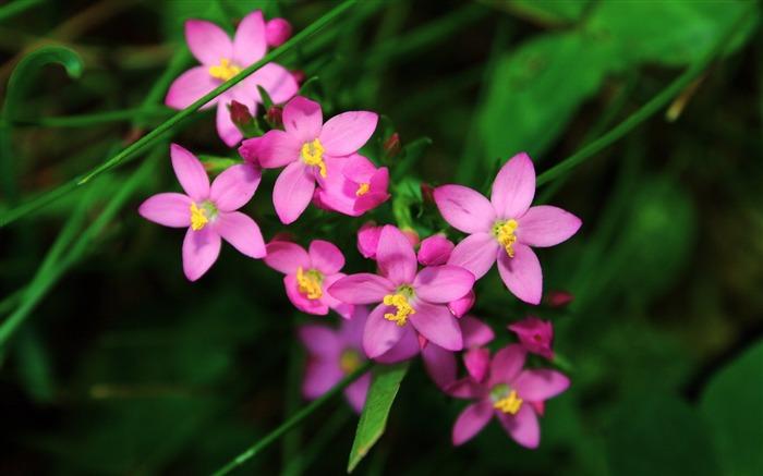 可爱的紫色花朵-高清摄影壁纸 预览
