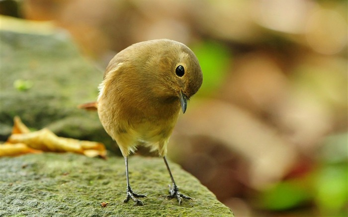Cute Little Bird-Animal HD Wallpaper Views:2575