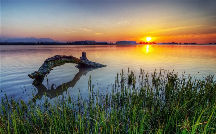 Dead Tree In Lake Sunset-Photos HD Wallpaper Views:3560