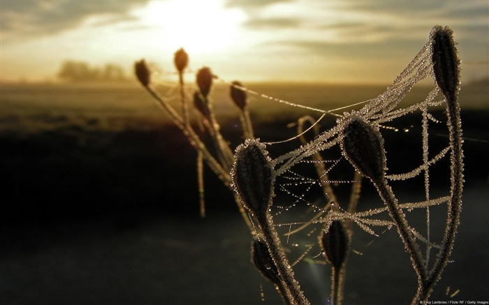 Frost cobwebs-Windows 10 HD Wallpaper Views:6091