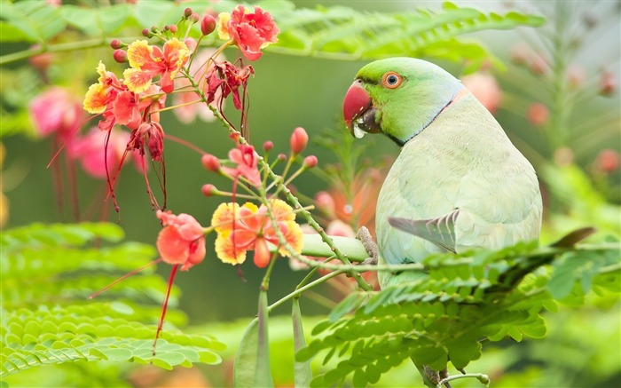 Parrot Bird On Tree-Animal HD Wallpaper Views:2634