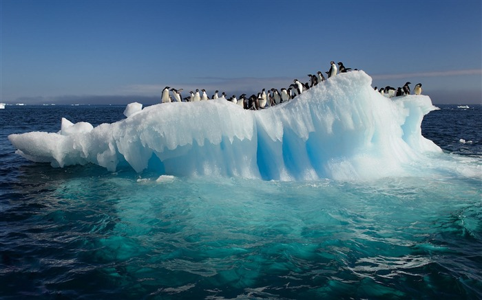 Penguins On Ice-Animal HD Wallpaper Views:2477