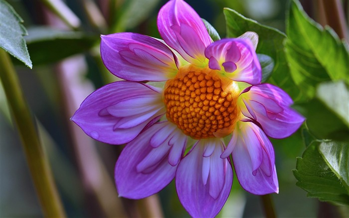 2014 Flowers selection of high-quality HD Wallpaper Views:6518
