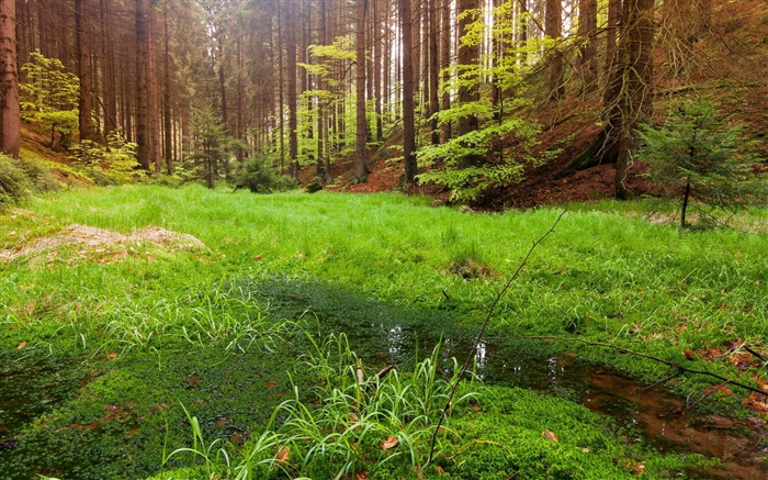 swamp in the forest-Nature wallpaper Views:5028 Date:12/12/2014 11:34:50 PM